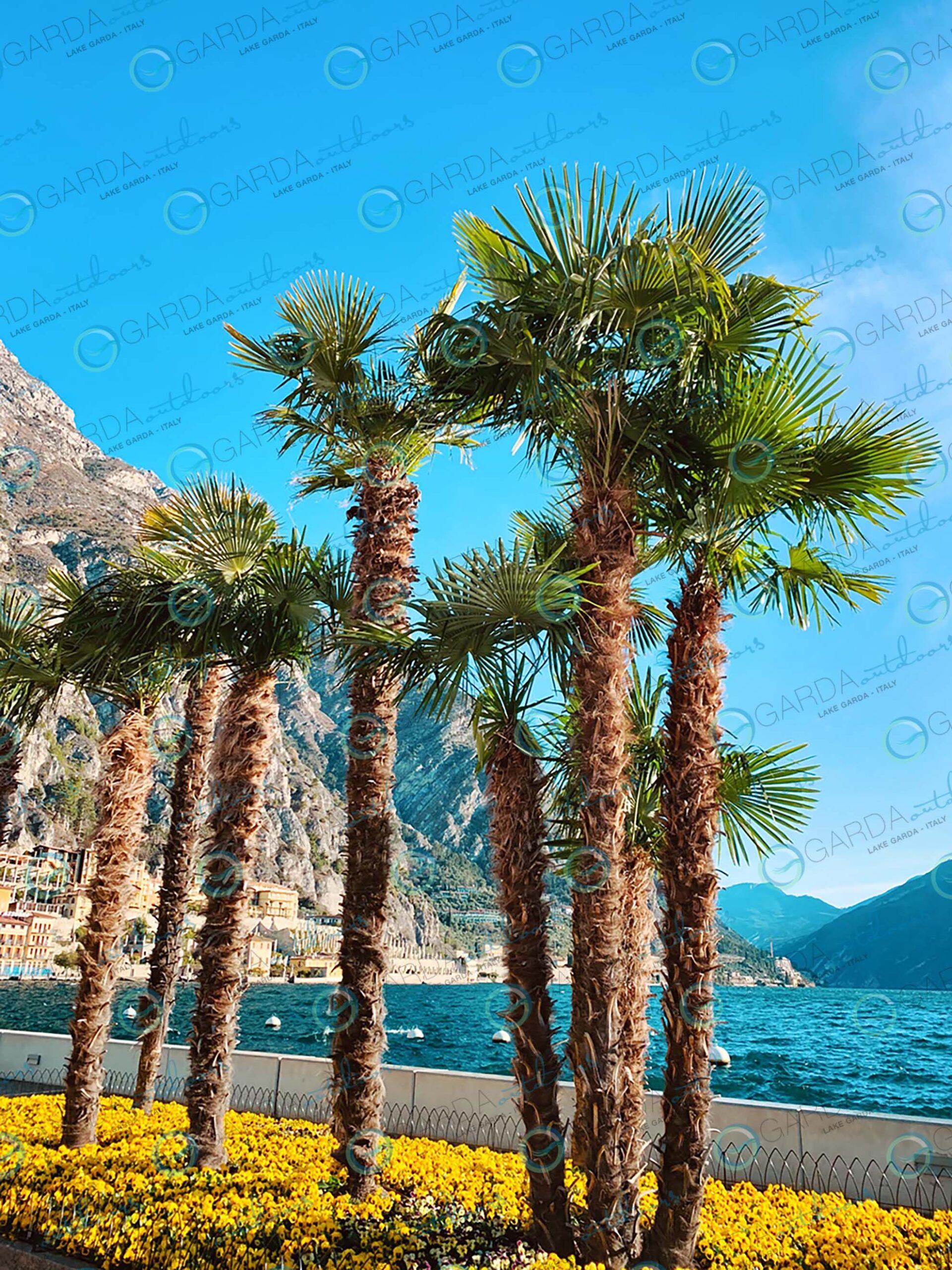 Limone sul Garda - palms