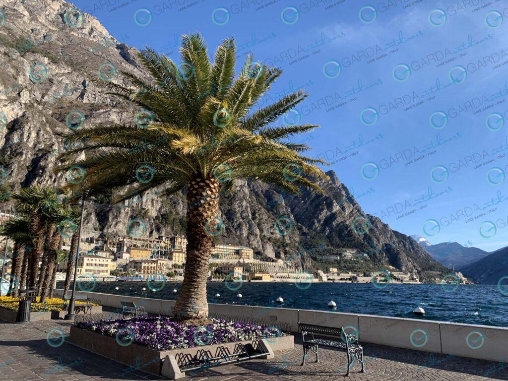 Limone sul Garda – palm and bench