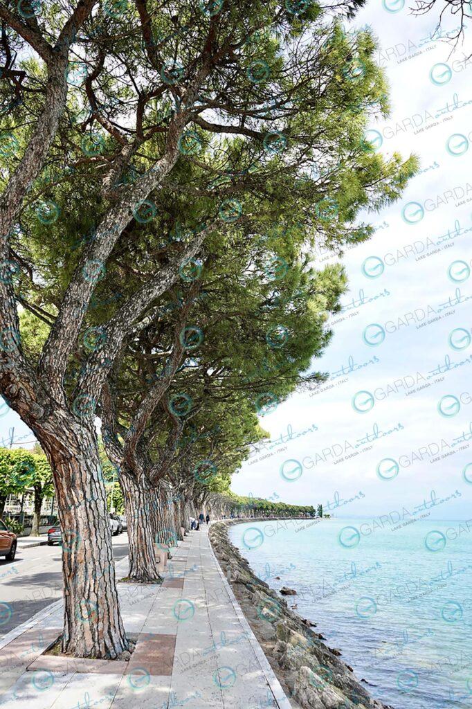 Peschiera – trees perspective