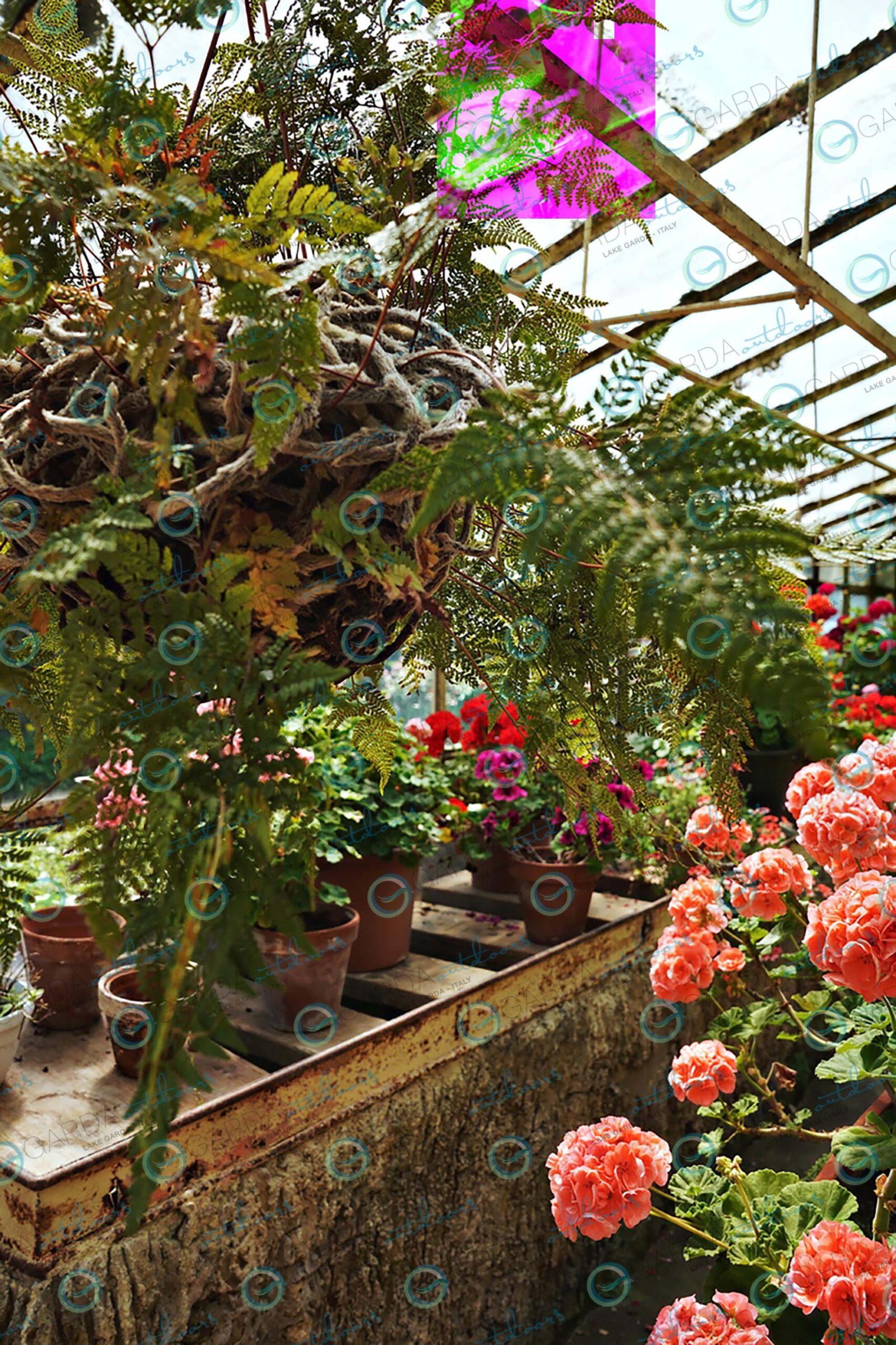 isola del garda greenhouse