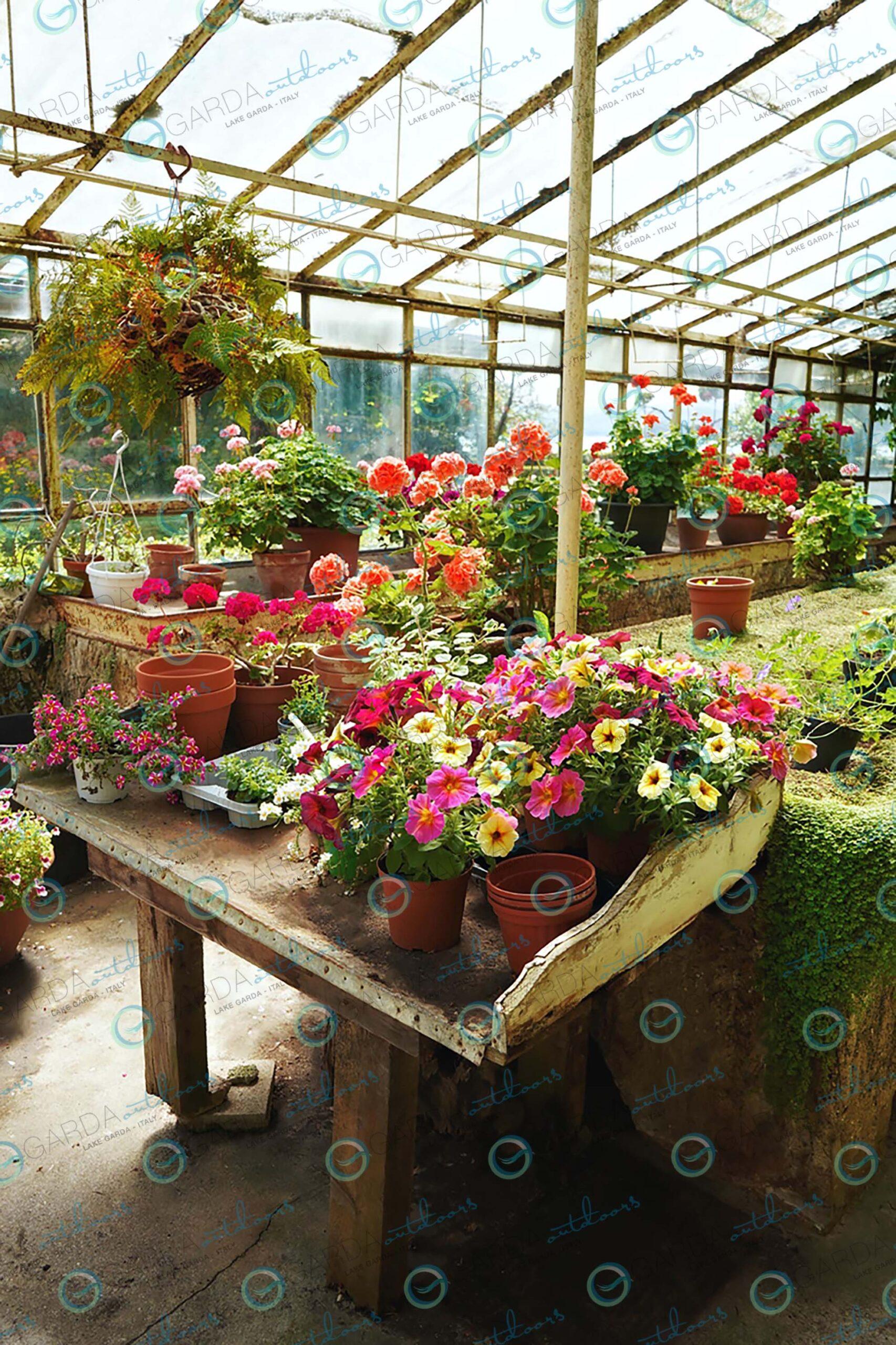 isola del garda - greenhouse