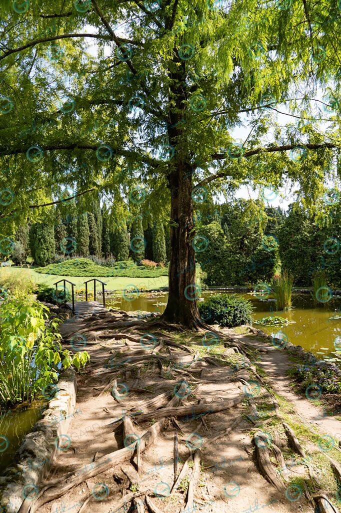 Parco Giardino Sigurtà – roots
