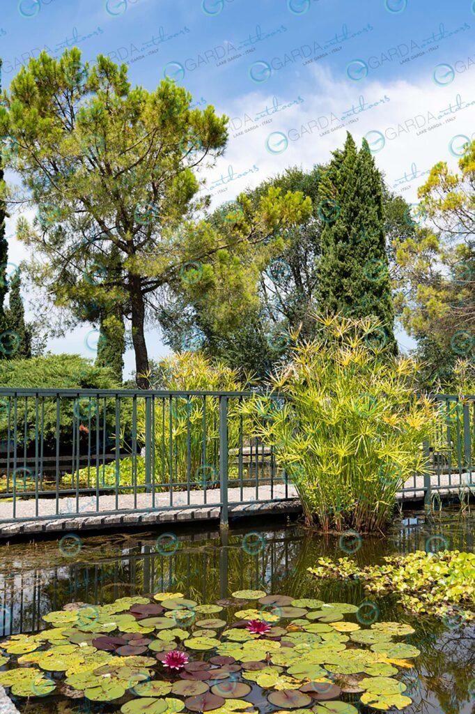 Parco Giardino Sigurtà – water lilies