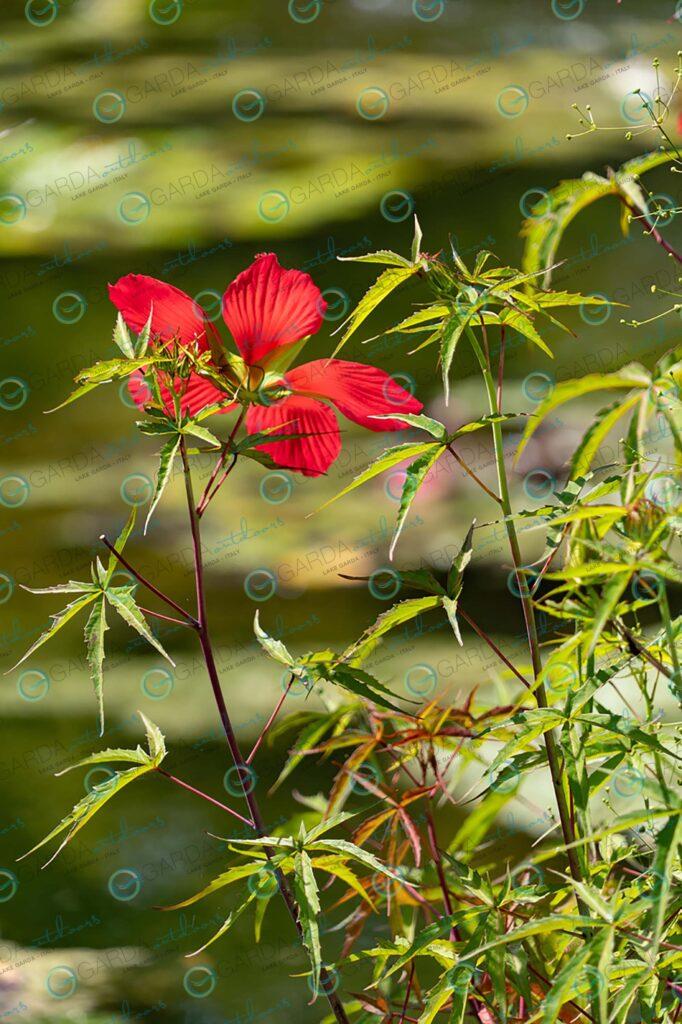 Parco Giardino Sigurtà – red flower
